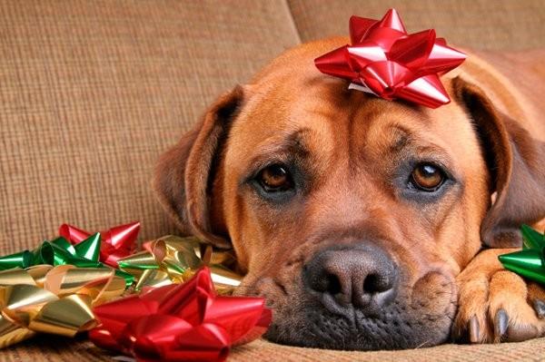The 12 Days of Pet-Safe Holidays