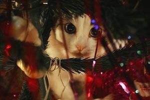 cat_tinsel