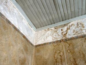 mold_wallpaper