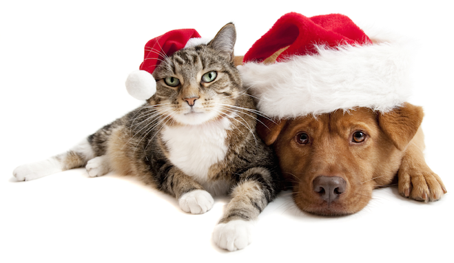 Tips for a Pet-Friendly Holiday